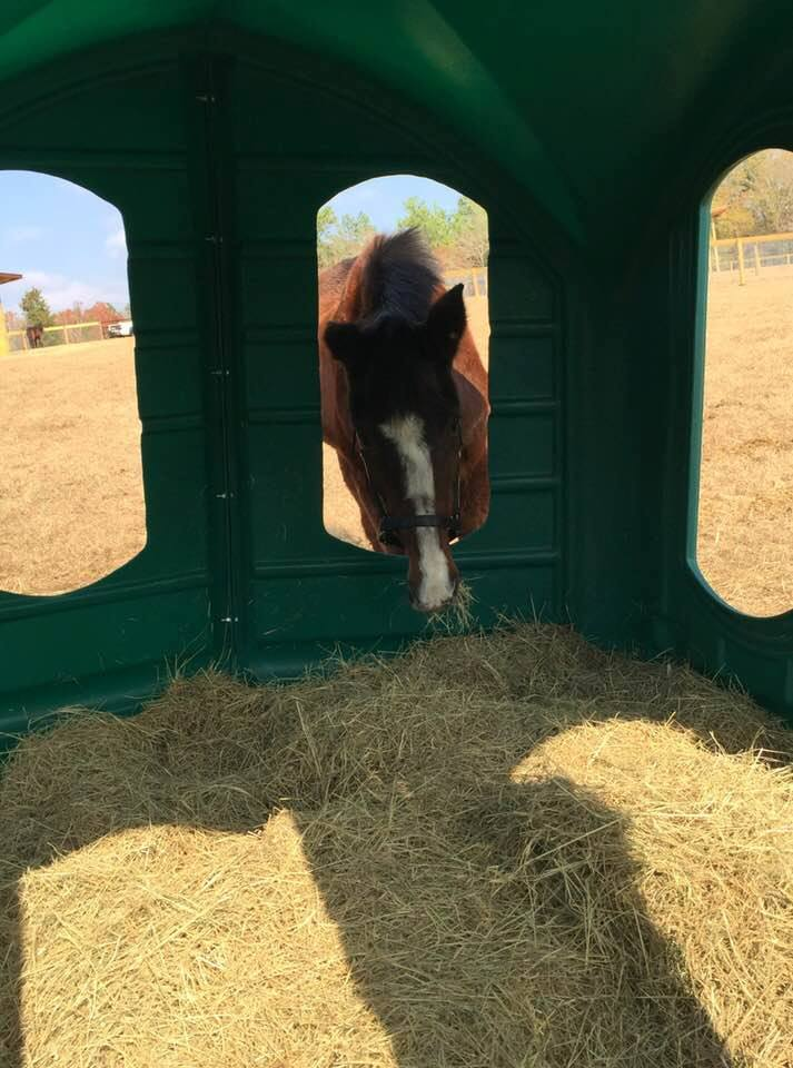 Horse enjoying clean dray hay in his Hay Hut