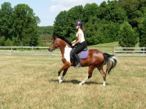 Contact New Era Farm for Horseback Riding Lessons in Aiken, SC